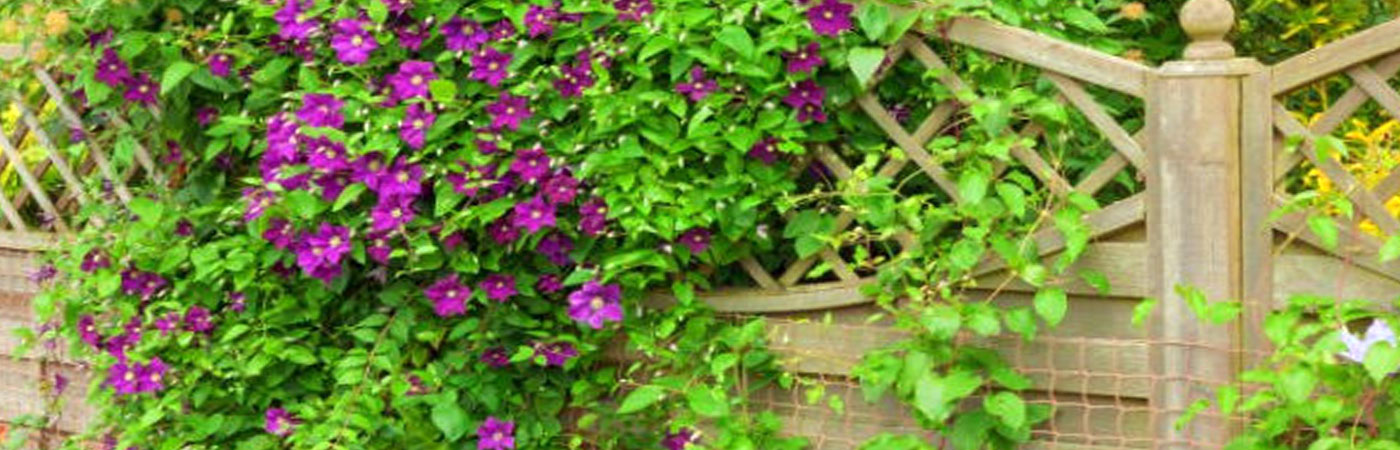 Лианарий на садовом участке