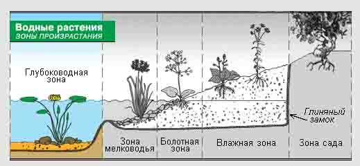 Схема зон произрастания