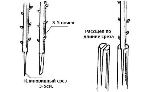 Схема срезов и расщепа