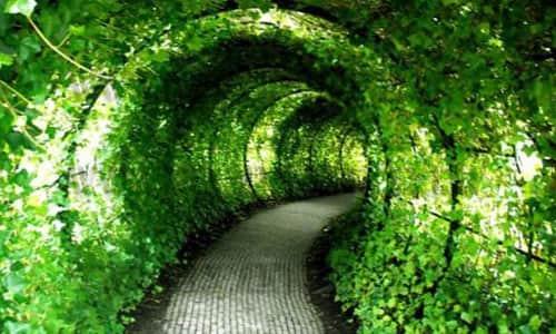Тоннель из винограда