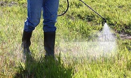 Обработка травы гербицидом