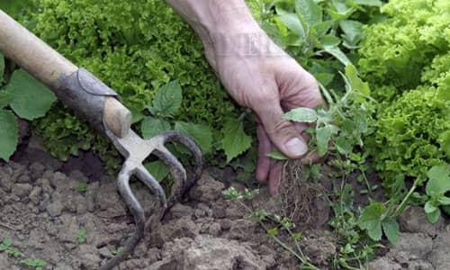 Механическая борьба с сорняками