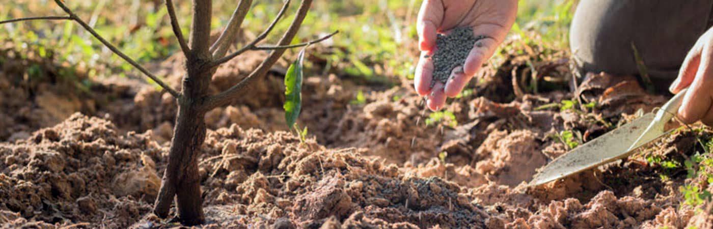 Подкормка деревьев и кустарников
